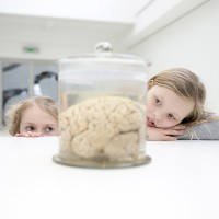 Het geheim van ons brein